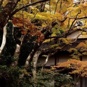 古都の秋 *京都 Ⅱ*