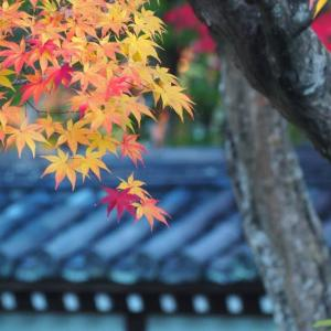 古都の秋 *京都 Ⅲ*