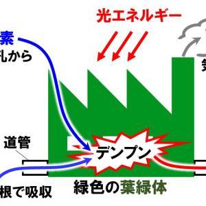 【中1理科】光合成と呼吸のポイントと問題演習