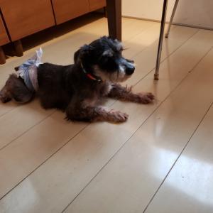 幸せ立会人(ハヤテ)&卒業犬