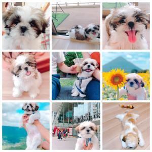 【1歳おめでとう♡】愛犬1歳のお誕生日!