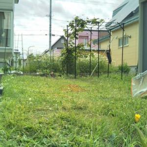 (2021年) 今年2回目の芝刈り