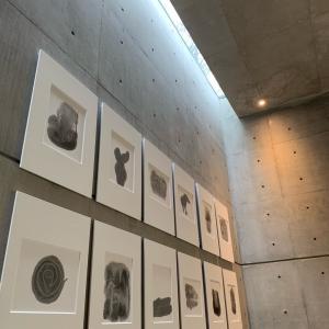 安藤忠雄先生設計のコシノヒロコ さんのギャラリーに行ってきました。