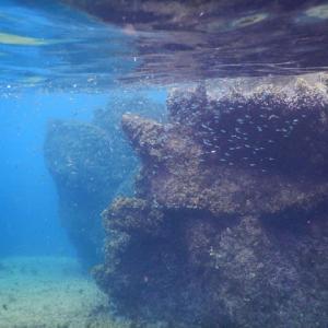 水中写真(One息)にチャレンジ2