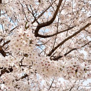 京都市動物園の春