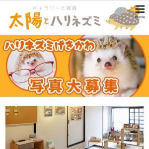 大阪グループ展『ハリネズミ・激かわ写真』募集中♪