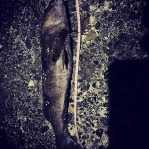 夜アブキャッチ、まだ寒い中の釣行。