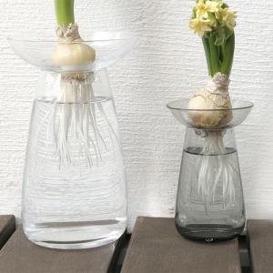 球根の水栽培用にKINTOのアクアカルチャーベースを購入しました。花瓶としても使えます【レビュー】