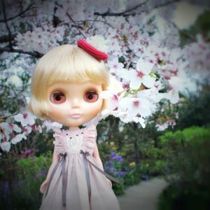 桜と雪柳とサンデーさん