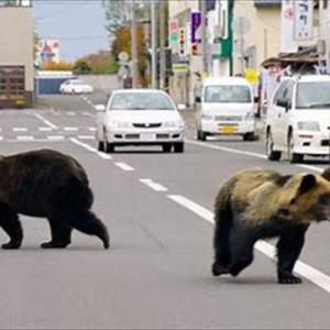 北海道の野生動物出現率。