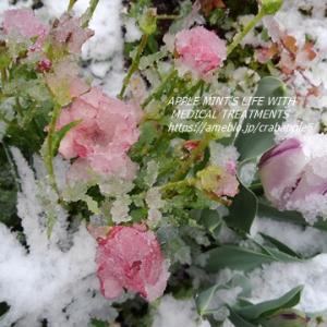 雪景色とNHK「プロフェッショナル」で「夢の国」スタッフ紹介