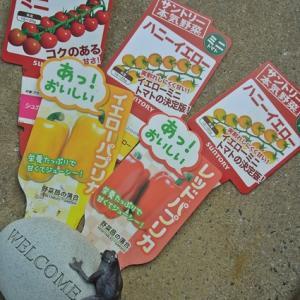 家庭菜園~やっとミニトマトをお迎え