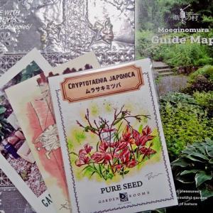 萌黄の村からの種(ムラサキミツバ)&中庭の花を摘んで(ルドベキアタカオ)と藤井風