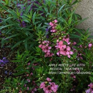 庭の様子と整形外科通院(骨密度)