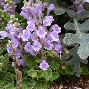 小さい花たちと「ヘルプマーク」の知名度