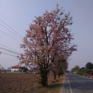 春の渡り・・・