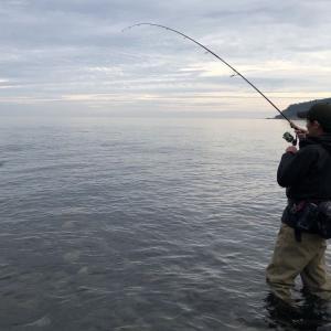 鮭釣り好調!