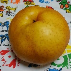 カボチャみたいな梨