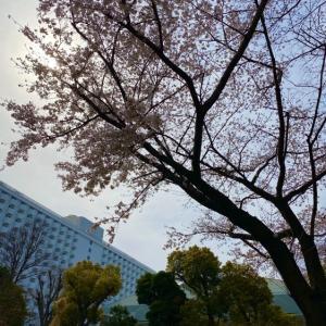 桜と春のデザートを求めて