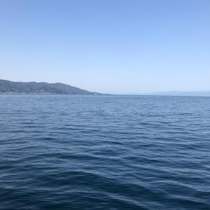沼津で狙う真鯛