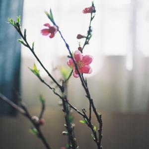 お部屋の花2