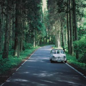 森に佇むミニ