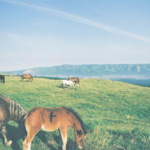 阿蘇の馬たち