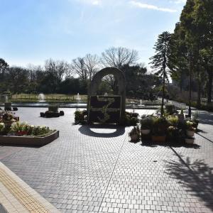 バラ 神奈川県鎌倉市 日比谷花壇大船フラワーセンター(1)アイスチューリップ