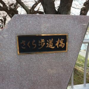 ソメイヨシノ 宮城県柴田郡柴田町(17)さくら歩道橋