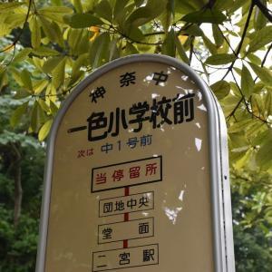 ヤマユリ狩り 神奈川県湘南二宮町 一色小学校・友情の山(1)一般公開