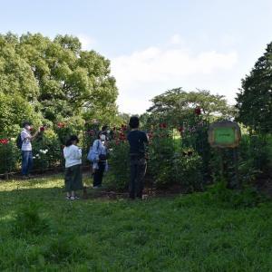 ひまわり・ダリア狩り 東京都立川市 昭和記念公園(7)ダリアの庭