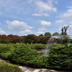 コスモス狩り 東京都立川市 昭和記念公園 コスモスまつり2020(1)