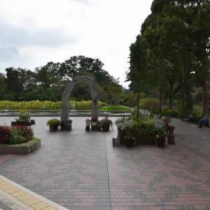 アケボノショキラン狩り 神奈川県鎌倉市 日比谷花壇大船フラワーセンター(1)もうハロウィン