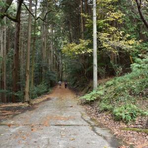 もみじ狩り 静岡県河津町 天城路フリーパス2日目(2)七滝、スタートは猿田淵