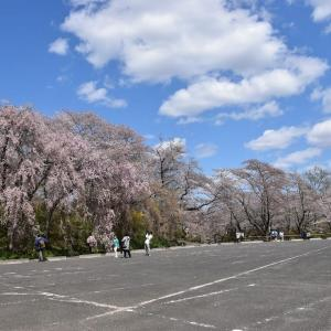 さくら狩り 宮城県柴田郡柴田町(14)車も観光バスも停まってない駐車場