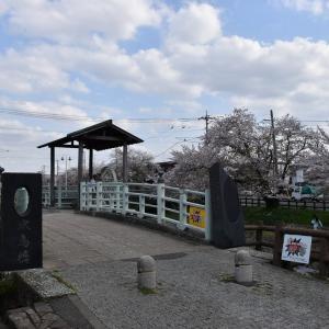 さくら狩り 埼玉県鴻巣市吹上本町 元荒川の桜並木(15)水鳥橋、遠所橋