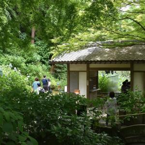 あじさい狩り 神奈川県鎌倉市 明月院:あじさい寺(2)六地蔵に屋根が