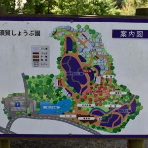 しょうぶ狩り 神奈川県横須賀市 横須賀しょうぶ園(4)案内図