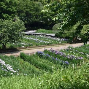 しょうぶ狩り 神奈川県横須賀市 横須賀しょうぶ園(6)もう1つのしょうぶ苑へ