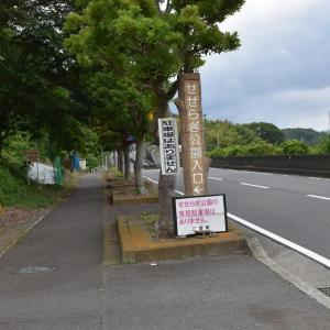 しょうぶ・あじさい狩り 神奈川県中郡二宮町 二宮せせらぎ公園(1)あじさい見頃