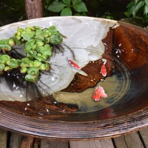 あじさい狩り 神奈川県鎌倉市 明月院:あじさい寺(7)水草と金魚