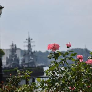 バラ狩り 神奈川県横須賀市 ヴェルニー公園(1)艦船と一緒に薔薇