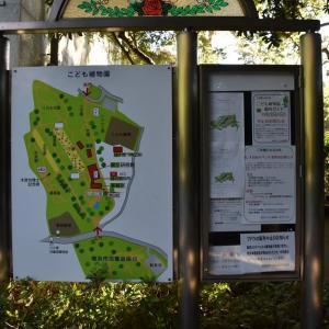 曼珠沙華狩り 横浜市南区 横浜市こども植物園(1)遊園地道路脇の曼珠沙華