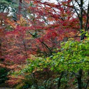 紅葉を求めて森林公園を行く