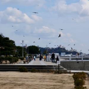 昼のひと時の海岸散歩