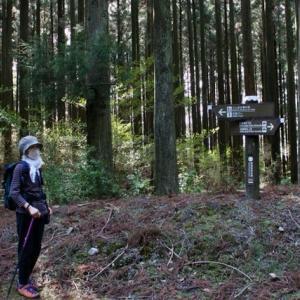 秋葉山へ登る