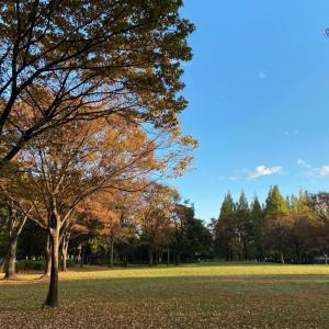 爽やかな秋空