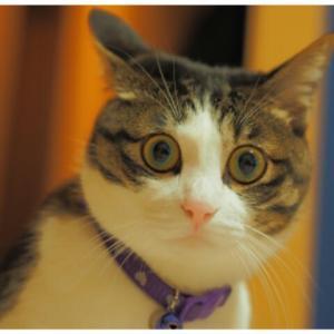 猫用ノミ・ダニ製品の副作用について