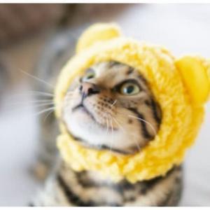 冬が来る前に♪猫の健康管理