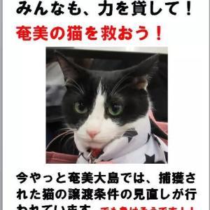 奄美ノネコの命を救うために!